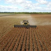 Growers benefit from greater sorghum choice